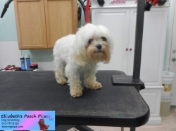 gracie-before-05-01-2015